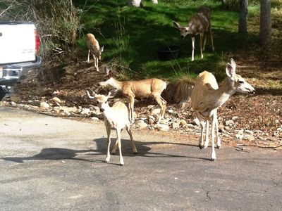 Our inquisitive deer family