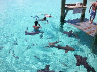 Great Exuma villa photo - A thrill seeker, you can dive and feed our local nurse sharks.