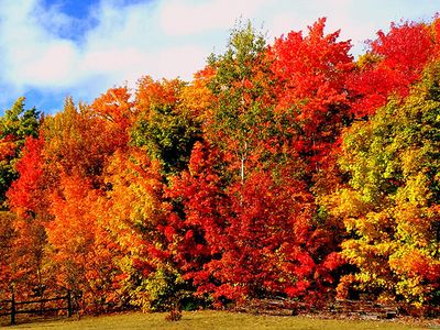 Fall colors explode within the 2500 sq miles of forest within one hour!
