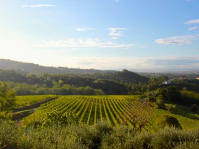 Colleverde Vineyards: 5 properties with pool surrounded by organic vineyards