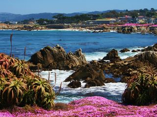 Pacific Grove house photo - The most beautiful coastline in California.