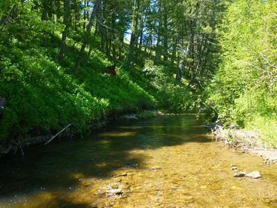 A Fishable Creek that Holds Brown and Cut-Throat Trout