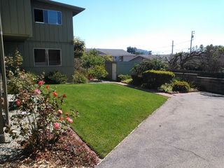 Morro Bay house photo - Large Yard with mature Apple Tree