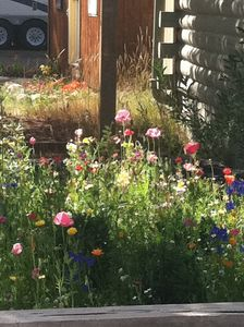Wild flower garden at the Cabin.