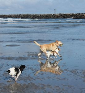 Your pups will enjoy the freedom of Dog Beach! 5 min from your cottage.