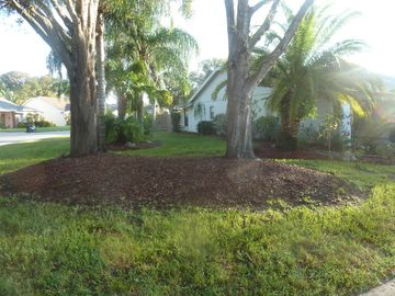 side yard with 12 palm trees!