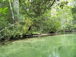 Weeki Wachee house photo - Upper Weeki Wachee River
