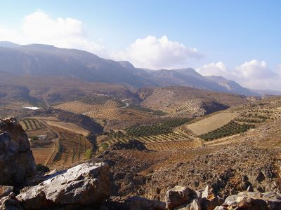 OLIVE GROVES ON THE SURROUNDING MOUNTAINS