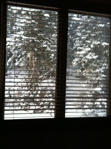 Private Forest View from Master Bedroom - Relax and Watch Snowflakes & Birds