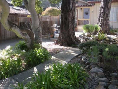 Front garden - California Oak and fir trees