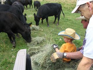 Durango cabin photo - Young and old can feed the cows