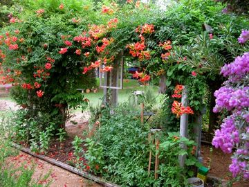 BEAUTIFUL GARDEN to have coffee, tea, read or snip herbs for cooking