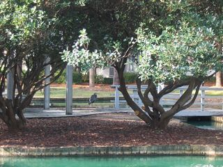 Port Royal villa photo - Stroll our beautiful grounds and enjoy the wildlife.