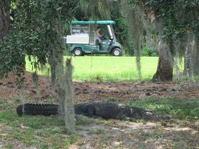 Golfing with gators!
