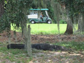 Shipyard villa photo - Golfing with gators!