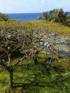 Hilo condo rental - Fantastic View from the Condo