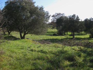 Land surrounding the trullo