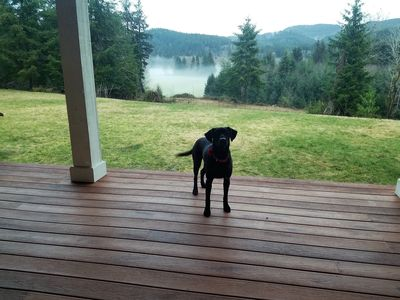 """Wild Duc Lodge"" family & pet friendly venue on the Olympic Peninsula"
