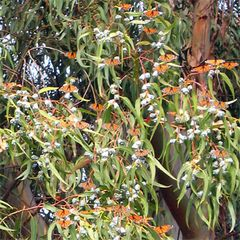 Pacific Grove house photo - Monarch Butterfly Sanctuary in Pacific Grove