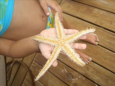 Beautiful starfish found and returned to the Ocean in front of Island HoppInn