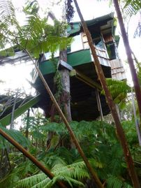 Opihihale cabin rental - Now that looks like a TreeHouse!