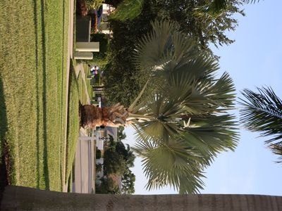Naples house rental - Briarwood Palmtree