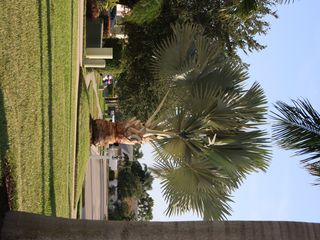Naples house photo - Briarwood Palmtree