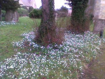 Snow drop in church opp teachers