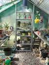 Greenhouse to explore and play in!
