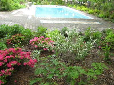part of pool with azaleas in bloom-