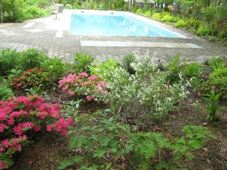East Hampton house photo - part of pool with azaleas in bloom-