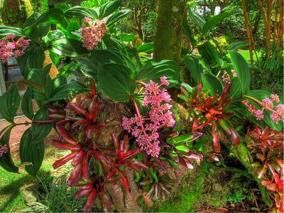 Hilo house rental - Delight in the display of colorful orchids and bromeliads in the garden