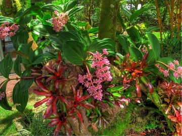 Delight in the display of colorful orchids and bromeliads in the garden
