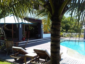 Coconut trees shading the pool edge