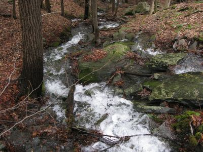 Surrounding forest and streams