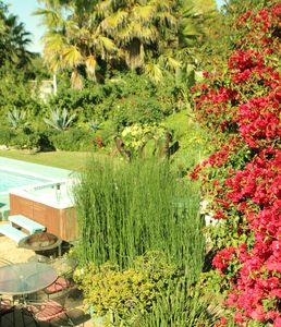 Tropical Colorful Pool and Spa Oasis - Relax & enJoy...
