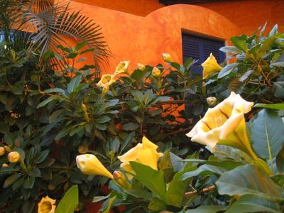 The Cup of Gold flowering vine gives Casa de las Flores its name.