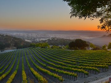 Paso Robles cottage rental - The view from your wine country getaway!