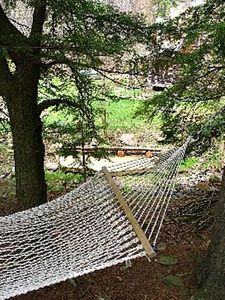 Hammock near stream in hemlock forest
