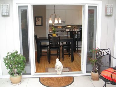 Leroy standing guard in french doors open to front patio.