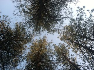 View from the hammock....if you can keep your eyes open.