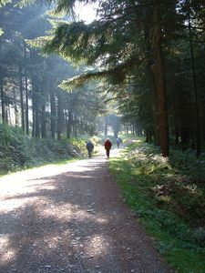 Bala chalet rental - Walk the forest paths or you could mountain bike
