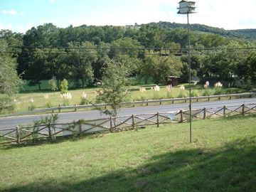 View of the Guadalupe River and surrounding hills from the Ponderosa's porch