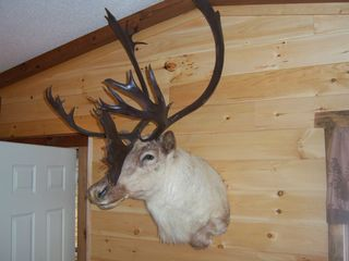 Cosby cabin photo - Trophy Caribou