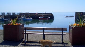 Our Cass enjoying a walk at the harbour