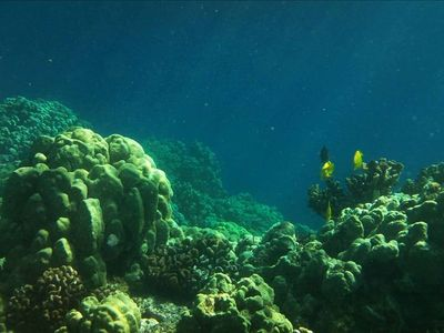 I took this snorkeling - best place on earth to snorkel. Don't miss it!