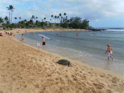 Turtle-Poipu Beach Park.5'drive from Waikomo 20'walk use Hoonani Rd.&along beach