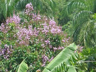 Aguadilla villa photo - Reina de las Flores (Queen of Flowers) In June