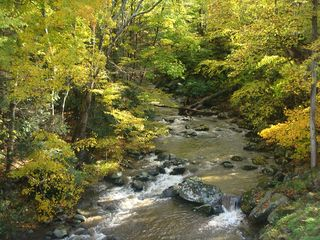 Bakersville cottage photo - Beautiful trout stream is literally 100 yards from Cottage!