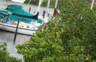 Tampa townhome photo - Close up Marina View from our town house balcony